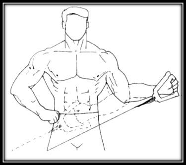 Cuffia dei rotatori e Body Building. Esercizi e prevenzione ... 2e458427ee56
