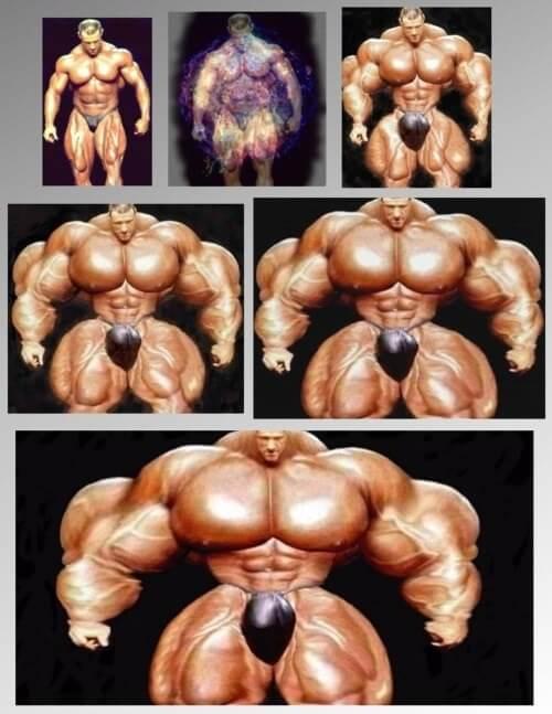 crescita muscolare quanto tempo