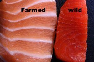salmone e body building